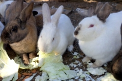 Hungry bunnies!!